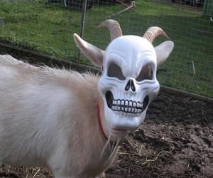 aesthetic and goat image