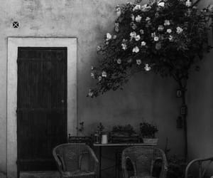 black and white and plants image