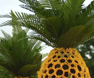 flower, fruit, and pineapple image