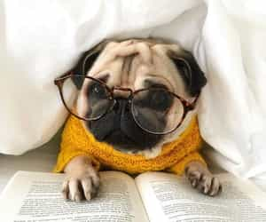 dog, book, and pug image