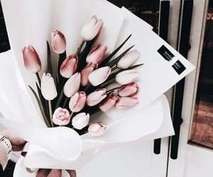 aesthetic, plants, and bouquet of flowers image
