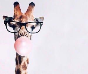 bubblegum, giraffe, and haha image