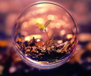 beautiful, image, and photography image