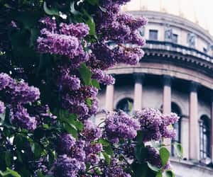 flowers, beautiful, and purple image