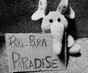 paradise, coldplay, and elephant image
