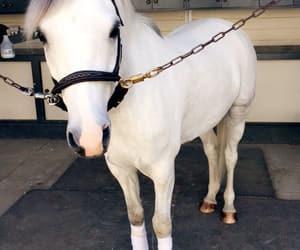 animals, white, and horse image