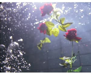 roses and underwater image