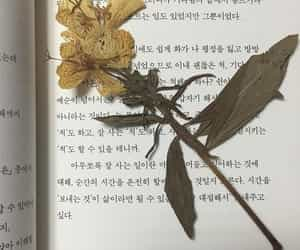 book, flower, and korean image