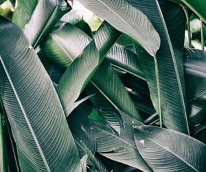 green, jungle, and vacation image