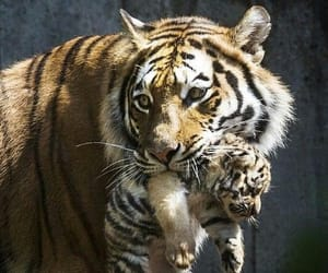 animals and wild cats image