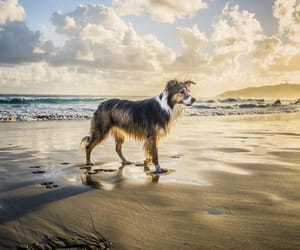 animals, dogs, and sky image