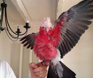aesthetic, animals, and parrot image