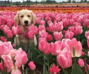 adorable, pretty, and flowers image