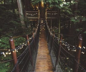 forest, bridge, and trees image