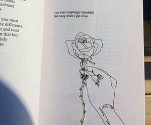 rose, book, and beautiful image