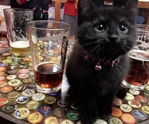 black cat, cat, and cute image