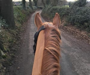 chestnut, equestrian, and hack image