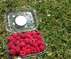 delicious, raspberries, and Sunny image