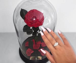 accessories, rose, and nails image