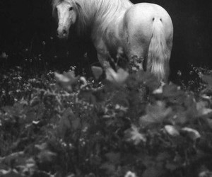 black and white, horse, and Dream image