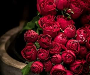red, romantic, and rose image