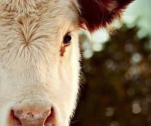 animals and farm image