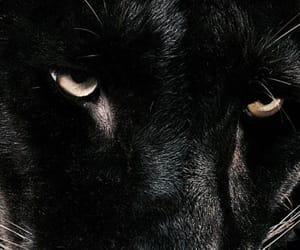 black, animal, and dark image