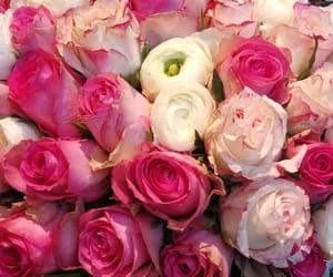 pink, rosa, and wunderschön image