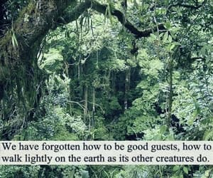 nature, earth, and quotes image