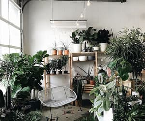 plants and place image
