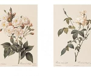 flowers, vintage, and art image