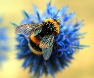 beautiful, bee, and flowers image