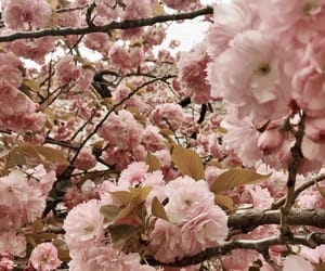 beautiful, blossom, and flora image