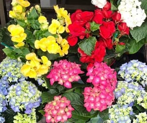 belleza, colores, and flores image