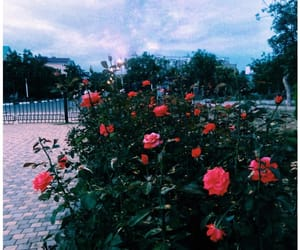 blue, roses, and flower image
