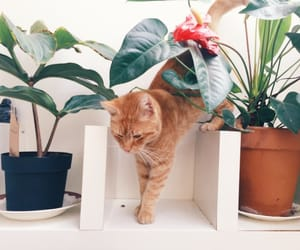 animals, cat, and green image