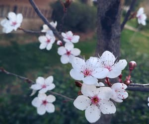 almond, blossom, and fleur image