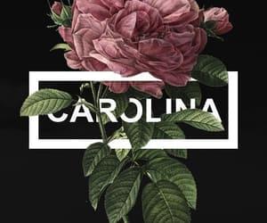 Harry Styles, Carolina, and Lyrics image