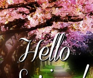 cherry blossoms, hello spring, and spring image