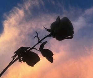 rose, sky, and tumblr image