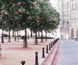 paris, spring, and flowers image