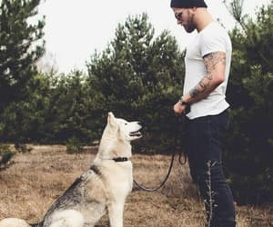 alternative, animals, and dog image