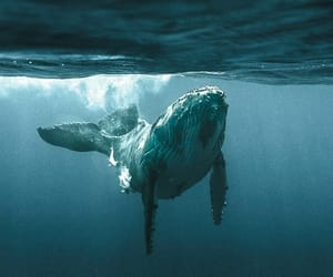 whale, animal, and ocean image
