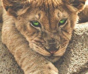 animals, beautiful, and green eyes image
