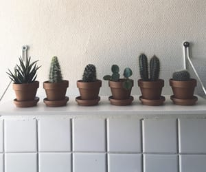 aesthetic, cactus, and decoration image
