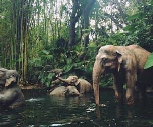 animal, wild, and elephant image