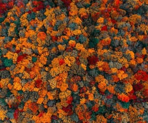 autumn, fall, and foliage image