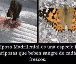 dato curioso and mariposa image