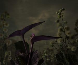 art, botanical, and dark image