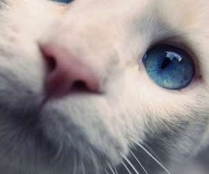 blue, photography, and cat image
